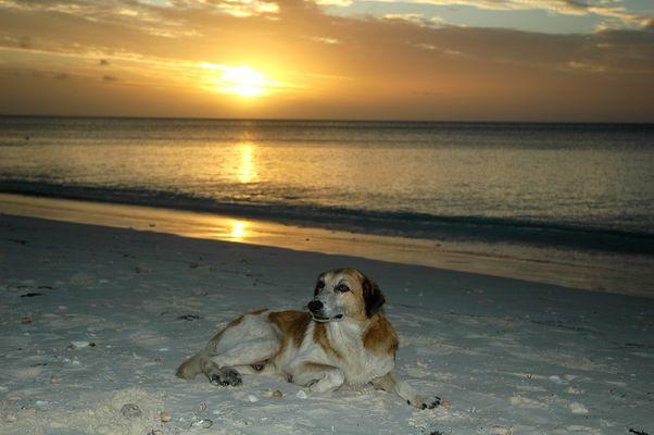Crépuscule sur la plage d'un atoll
