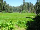 Crescent Meadow im Sequoia Nationalpark