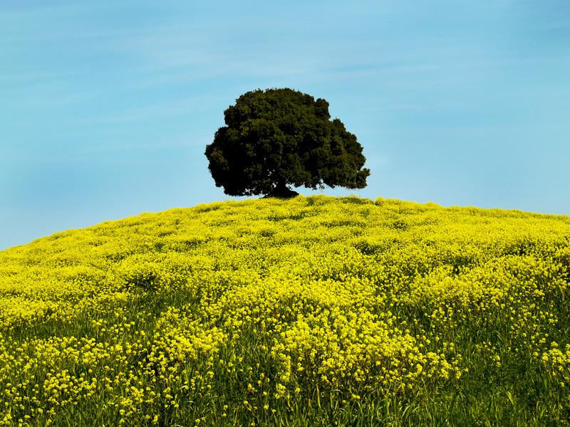 Crete a primavera 10