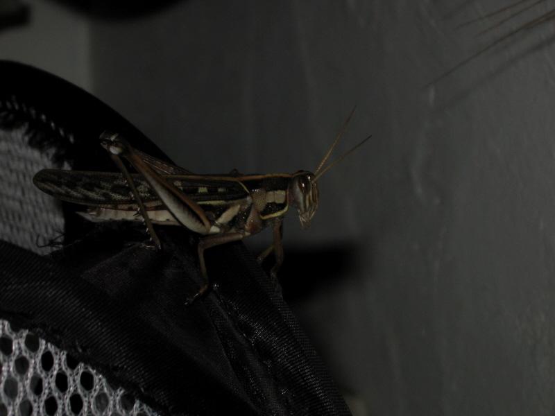 cricket....
