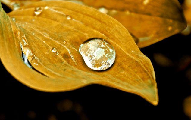 Cristal Drop