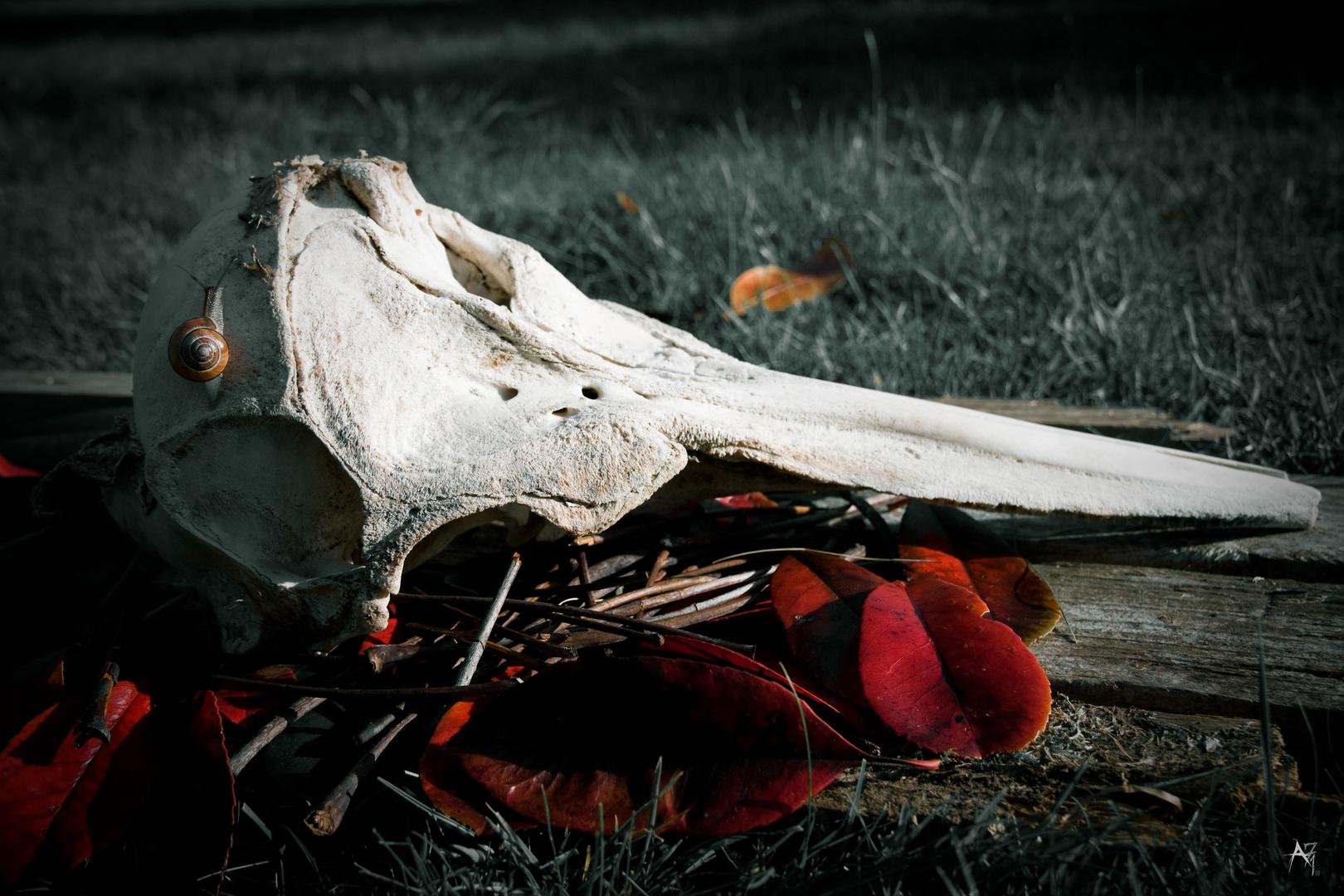 crâne de dauphin et escargot