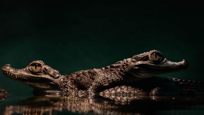 Croc en stock