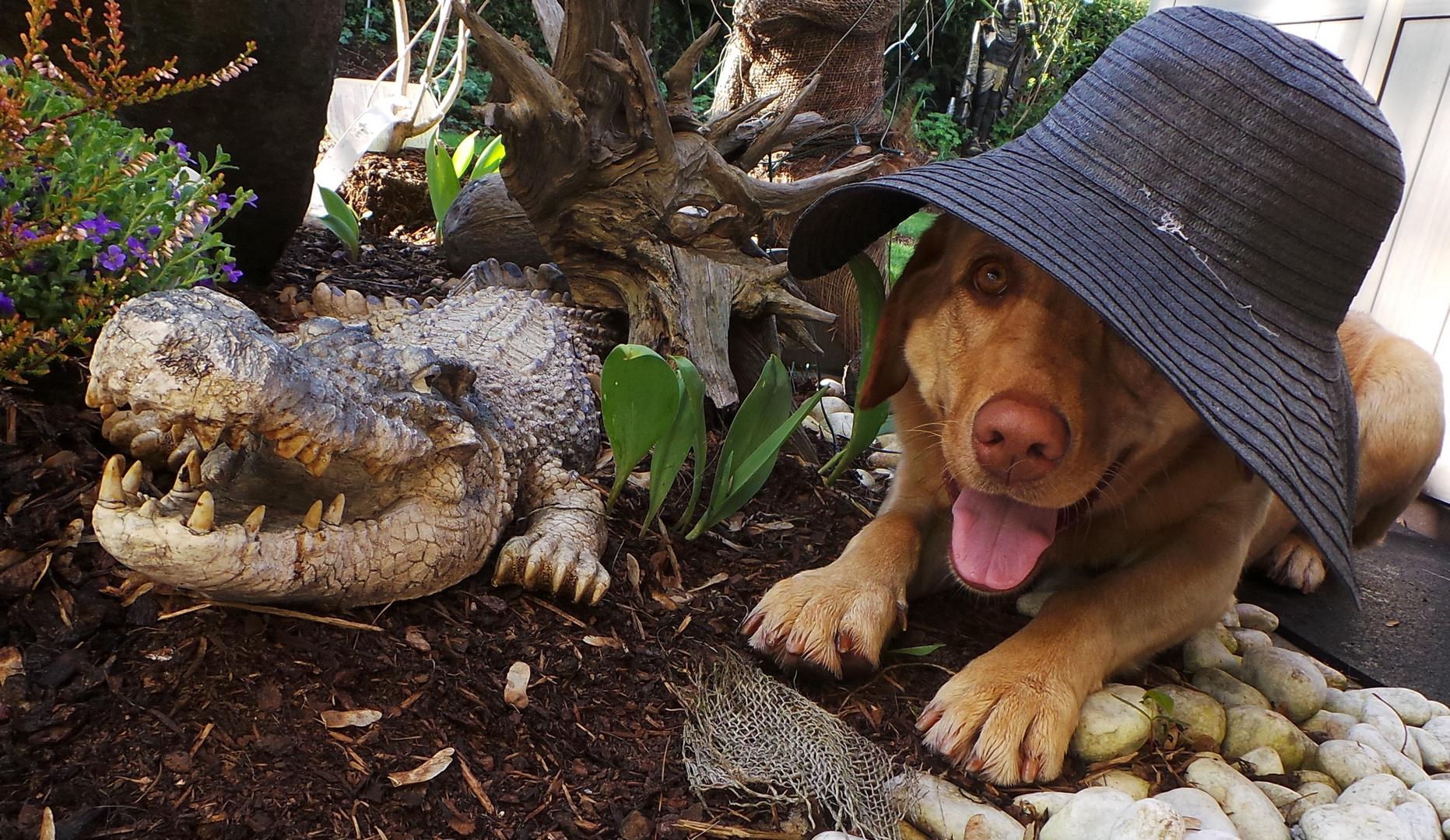 crocodile dundeeee