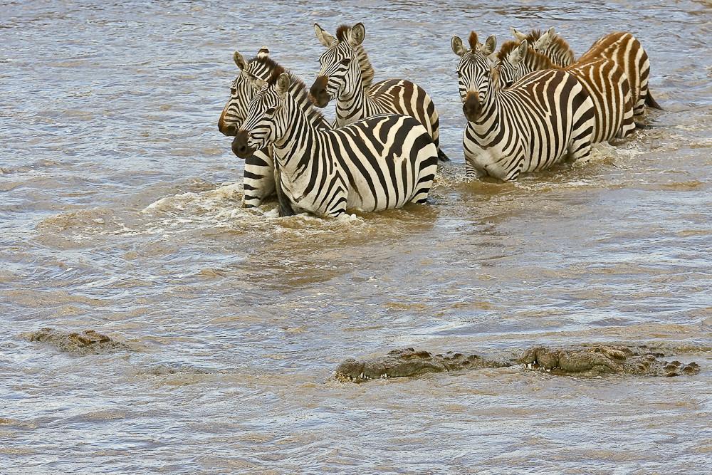 Crossing am Mara River II