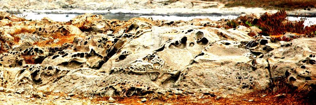 Crostacei di roccia
