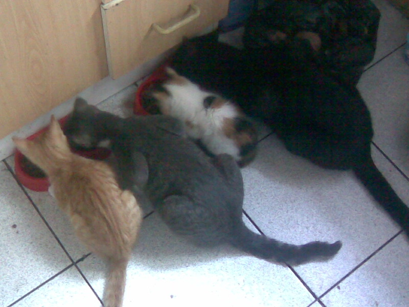 Crowley, Yira, Ambar y Yiyi