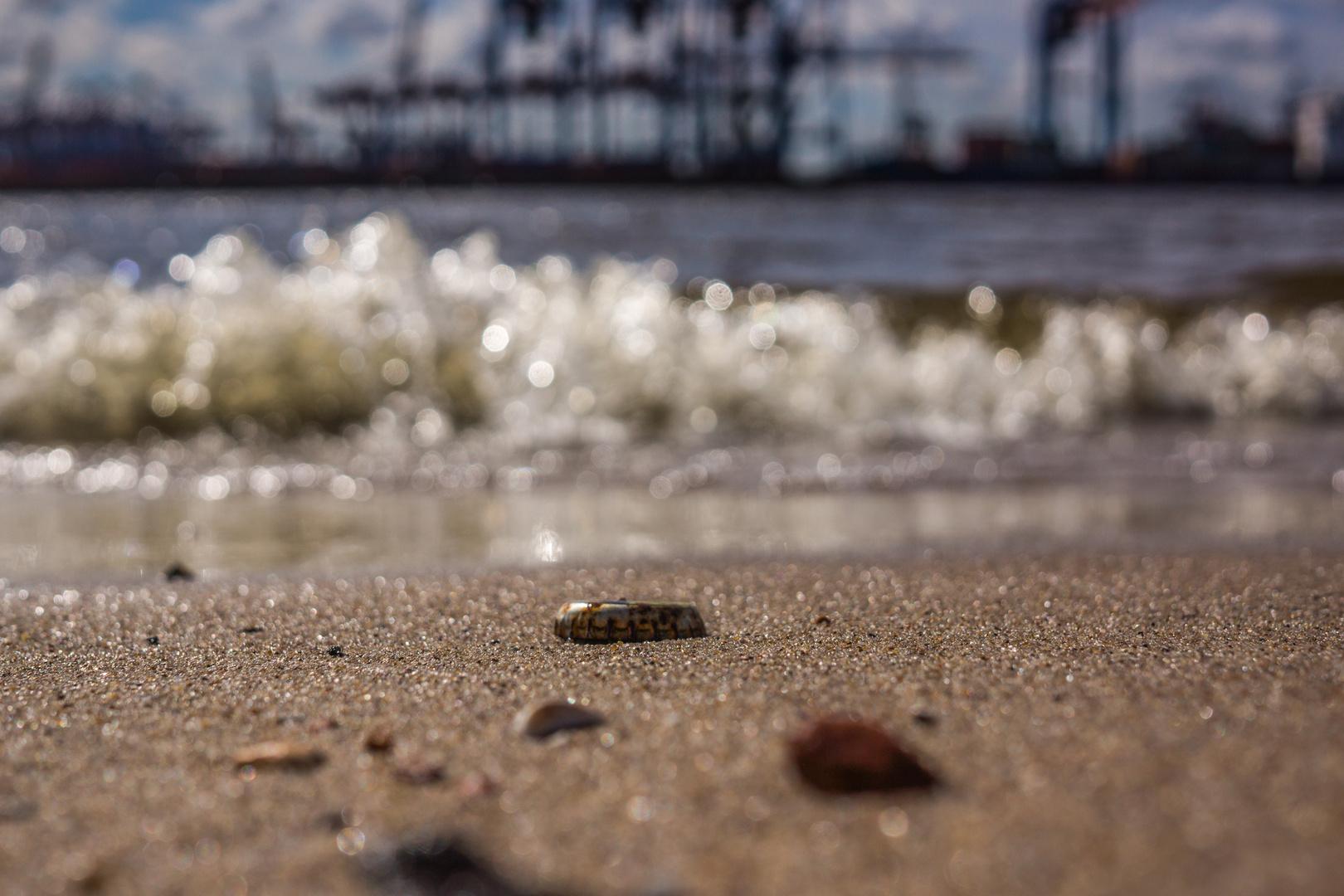 Crowncap on the beach
