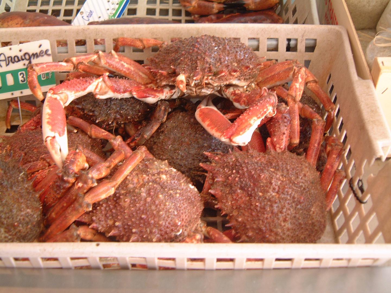 Crustaceans on Ile de Noirmoutir