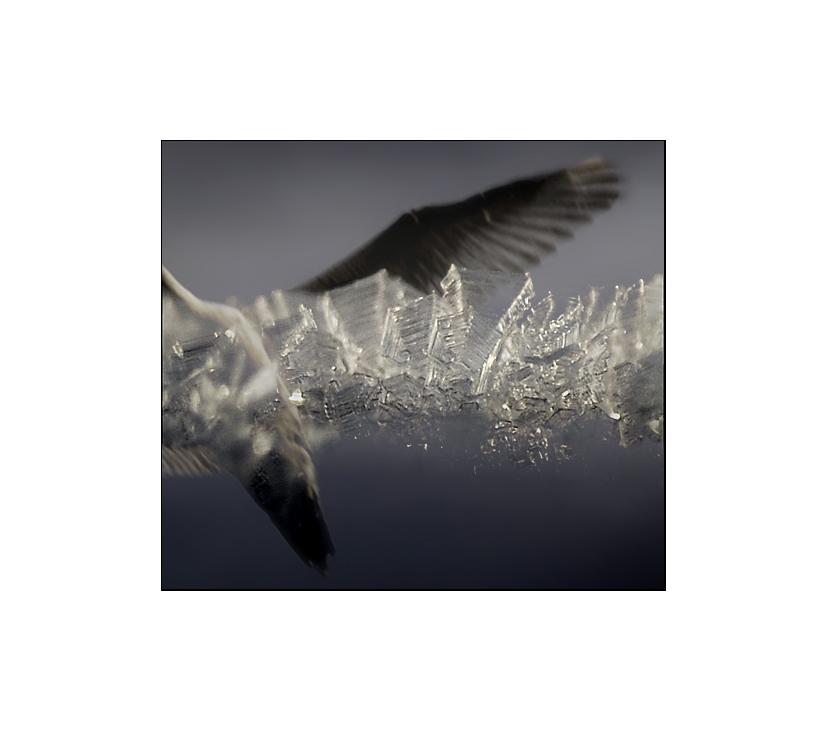 Crystal Flight