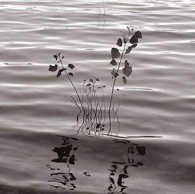 Cual es el reflejo de la mente?