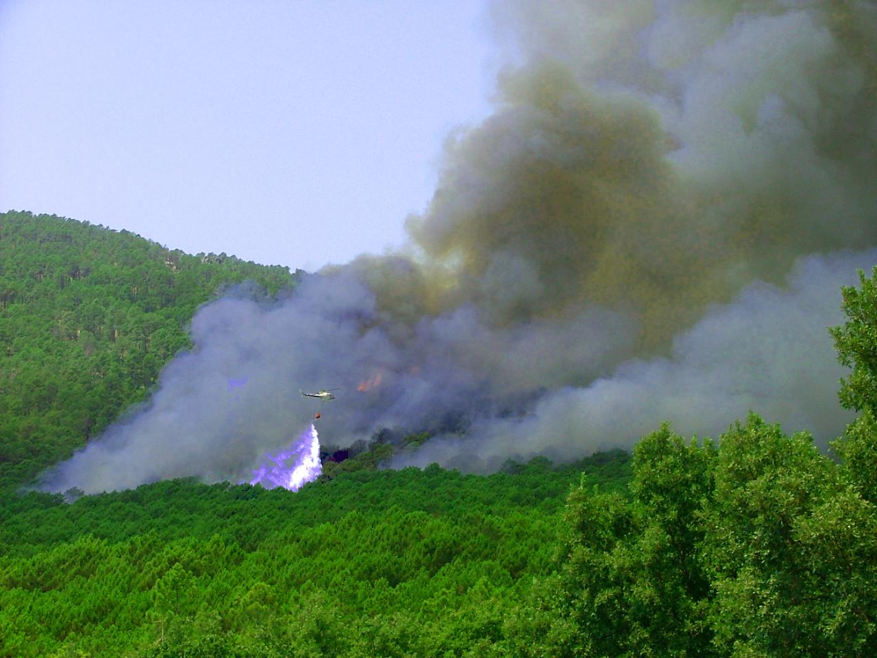 Cuando el bosque se quema, algo nuestro se quema I