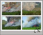 Cuando el bosque se quema, algo nuestro se quema... II