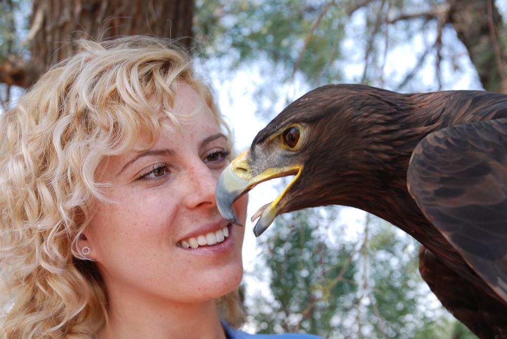 Cuautli (Aguila)