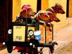 Cuba on Street