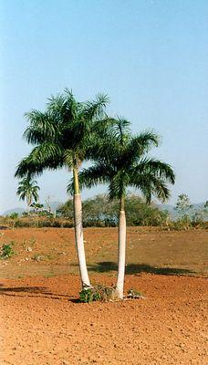 Cuba - Overland