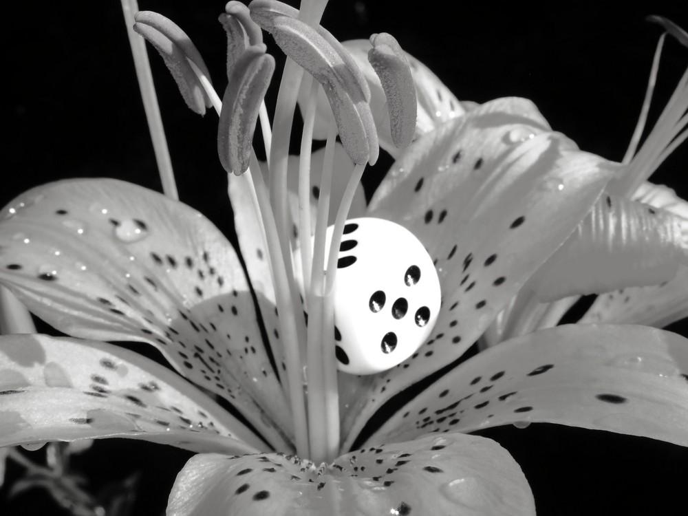 Cube vs. Flower