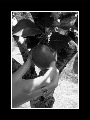 Cueillir la pomme