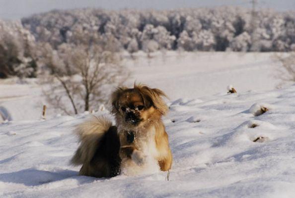 Cukis erster Schnee (Serie 2003) 1