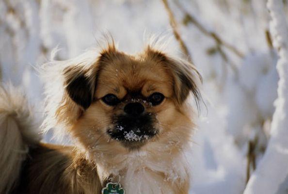 Cukis erster Schnee (Serie 2003) 3