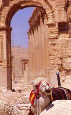 Cultural Palmyra-Syria 9