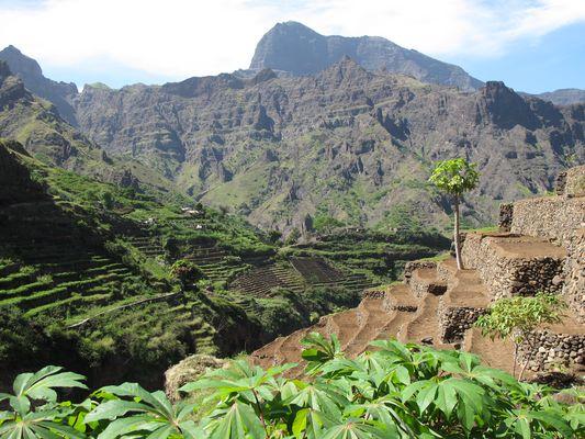 Cultures en terrasse dans la vallée d'Alto Mira, sur l'île de Santo Antao