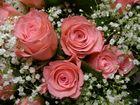 cuore di rosa