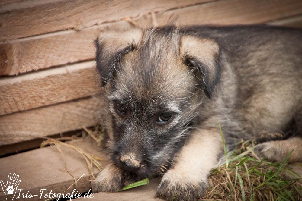 Curacau der kleine Terriermix