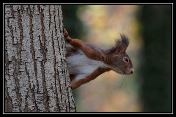 Écureuil à l'affût!