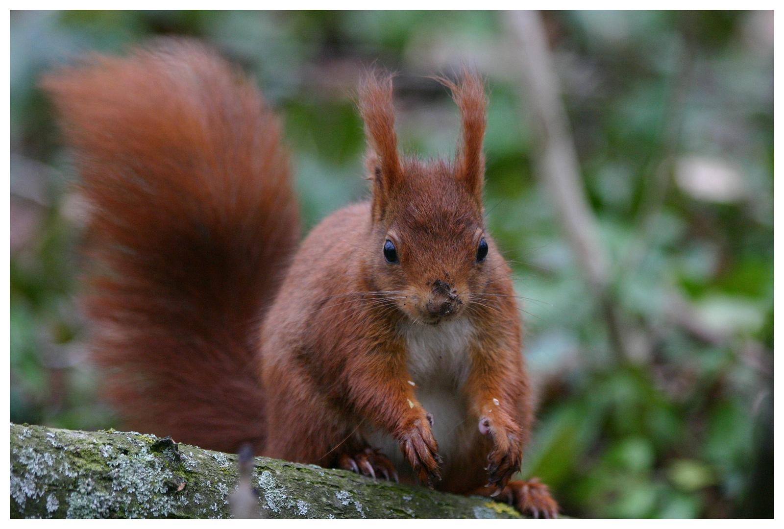 Écureuil au Parc de Sceau