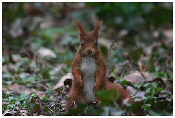 Écureuil au Parc de Sceaux - 1