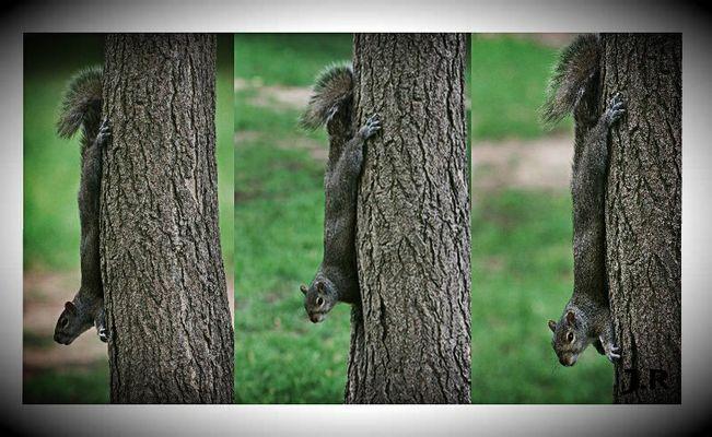 Écureuils dans la nature