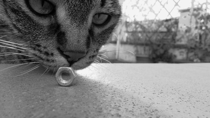 Curiosità.