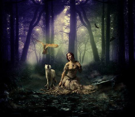 Curiosité de Loup