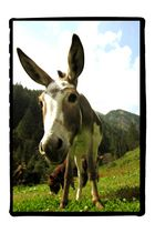 curious about the donkey behind the camera