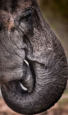 Curves in nature - the elephant
