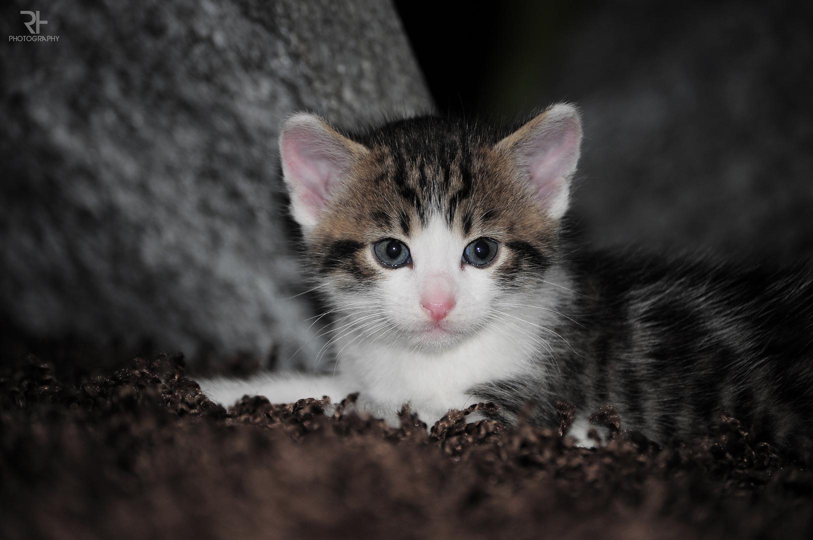 cuteness: overload !