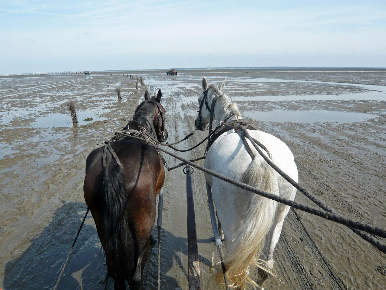 Cuxhaven IV