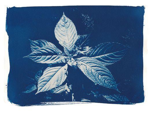 Cyanoblätter