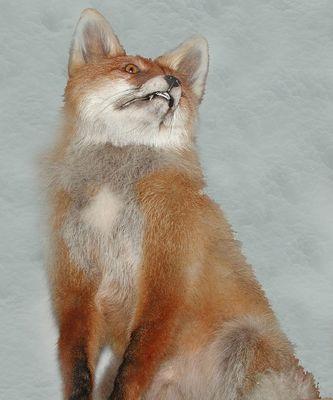 Cyber - fox