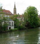 Cygne seul sur la Moselle
