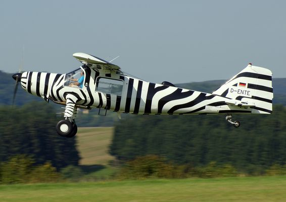 - D - ENTE - oder das fliegende Zebra
