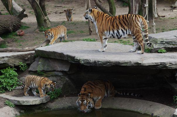 -D- Köln Zoo - Papa, Mama und die Kleinen