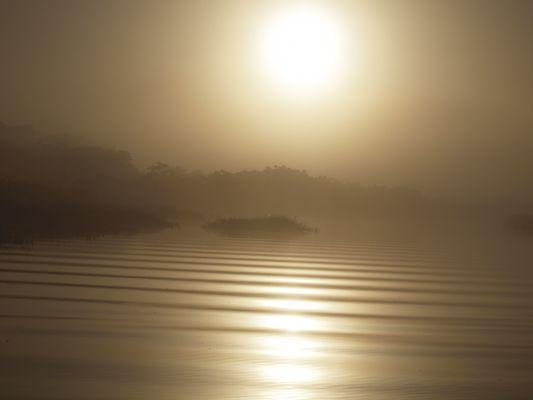 d or et de brume...le marais de kaw