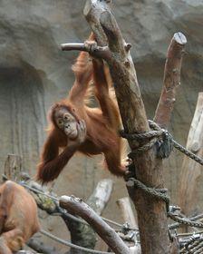 fc -Treff Kölner Zoo 24.04.04
