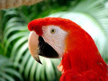 Parrots&parakeets