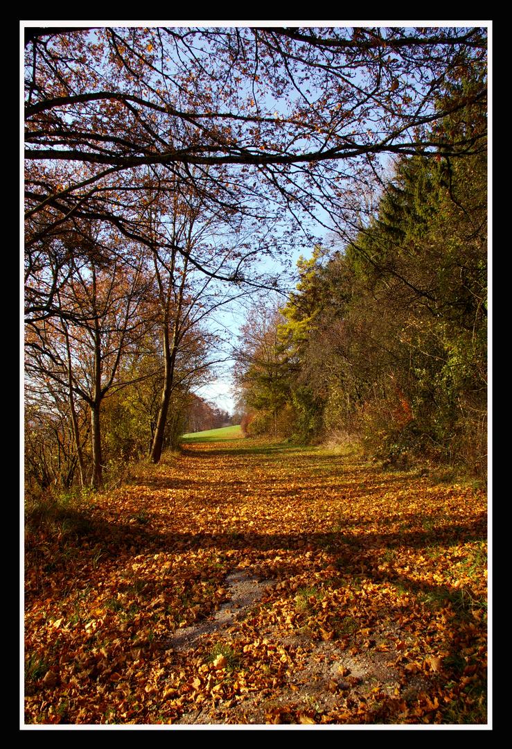 Da fallen die Blätter...