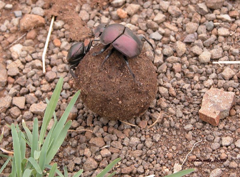 Da geht's rund sprach der eine Käfer zum Andern