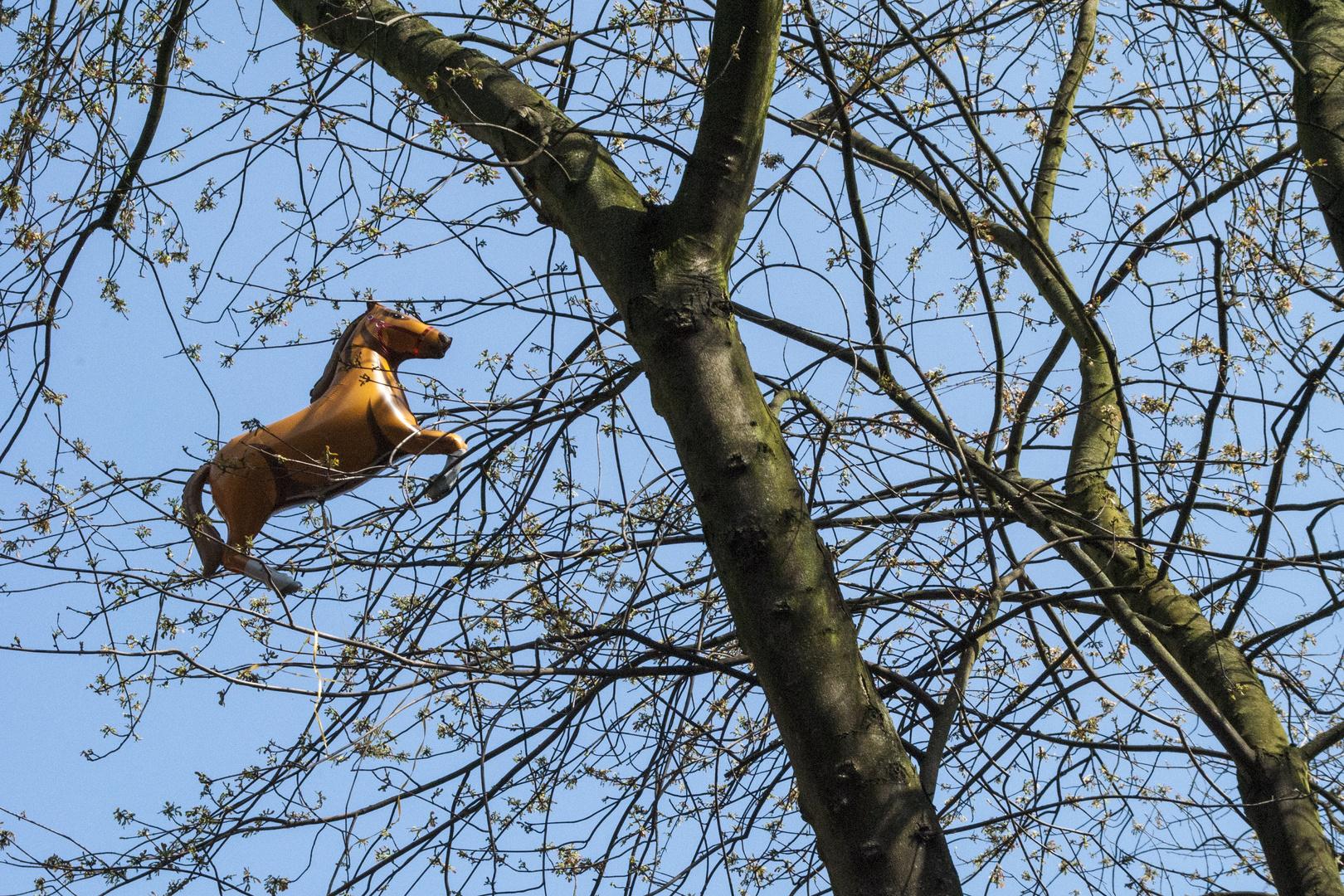 Da hängt ein Pferd im Baum II