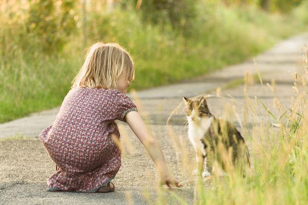 Da hat jemand die Katze entdeckt=)